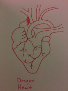 human heart in red labeled dragon heart