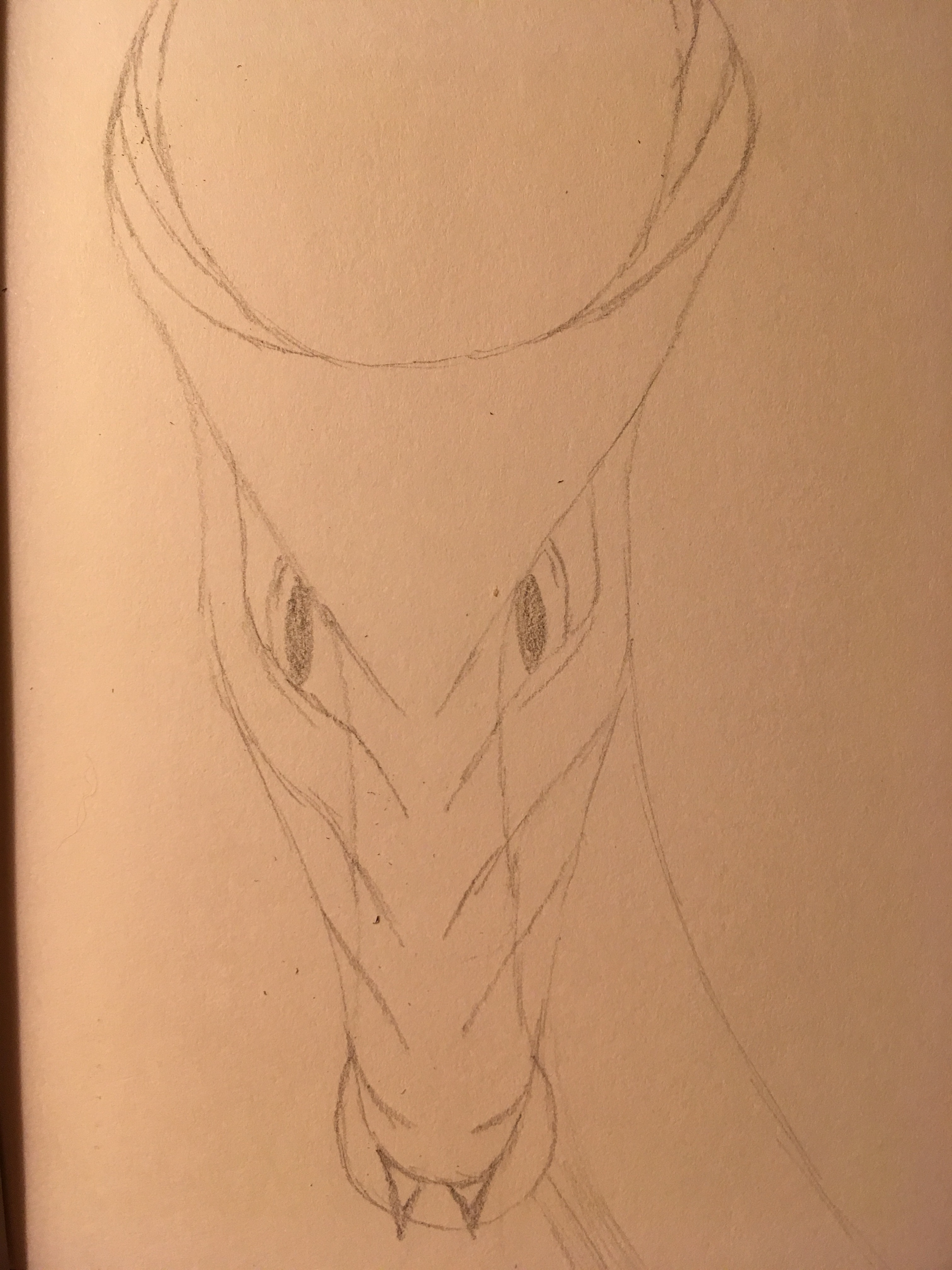 Straightforward face in pencil of a dragon